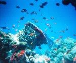 marine wild life extinct
