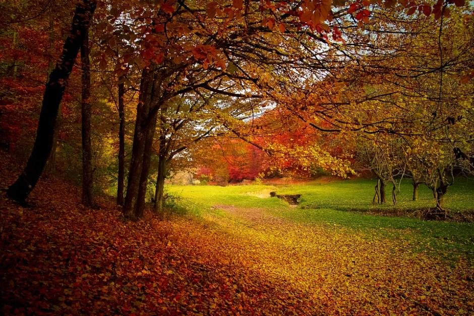Herbstausfahrt_Title