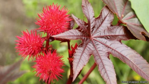 150824193317_earths_most_poisonous_plants__512x288_stocksnapperalamy