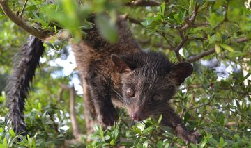 3 Tasty and Humane Alternatives to Civet Coffee