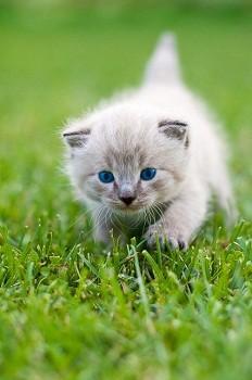 Cute Little Kitten Desktop Wallpapers 伊野尾慧はホワイトモカ顔 かわいさの秘密を顔の専門家が解説 マイナビニュース