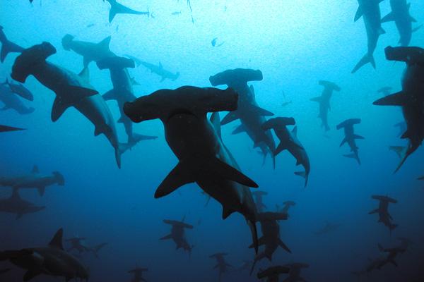 في أعماق جزر غالاباغوس