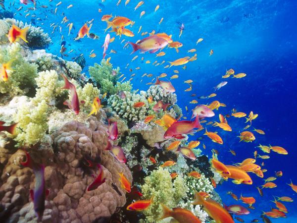 المتعة دائماً حاضرة في أعماق البحر الاحمر