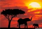 كينيا أوغندا ورواندا