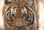 أفضل حدائق الحيوان في العالم لعام 2015