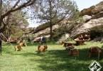 متنزه المحفار