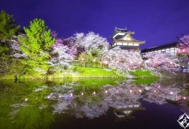 الربيع الوردي5