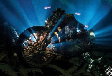 الشعاب المرجانية10