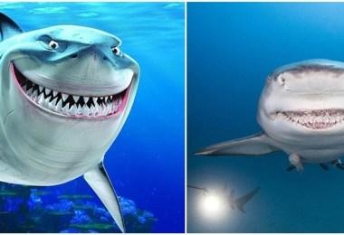 القرش المبتسم1-horz