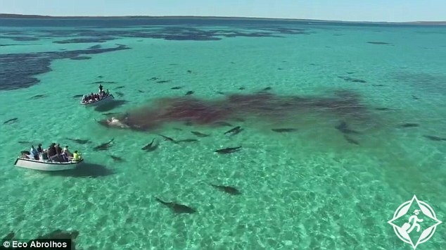 بالفيديو: لحظات رهيبة لسياح وجدوا أنفسهم بين 70 قرشا في المحيط