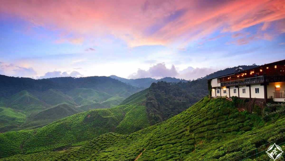 شهر العسل بطعم الفراولة في مرتفعات كاميرون هايلاند ، ماليزيا