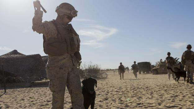 A Marine with 1st Law Enforcement Battalion, I Marine Expeditionary Force, prepares to commence directed seek and receive drills during Exercise Desert Scimitar 2015 aboard Marine Corps Air Ground Combat Center Twentynine Palms, California, April 9, 2015. US Marine Corps photo.