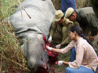 Assam asks for CBI probe into rhino poaching