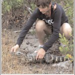 Maya Totman relocates a juvenile alligator