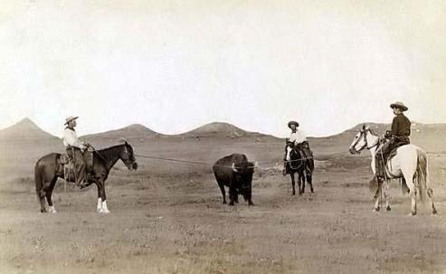 Three Cowboys roping a buffalo.