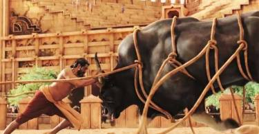 Baahubali bull fight