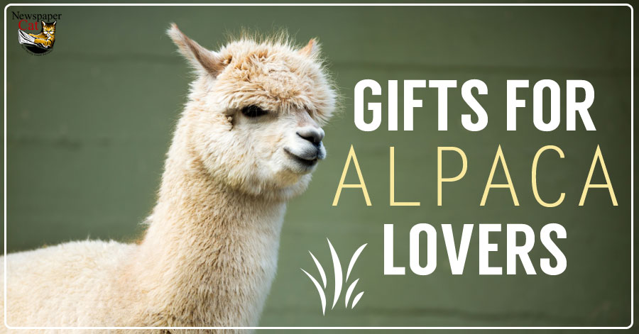 Cute Unique Present Ideas And Gifts For Alpaca Lovers