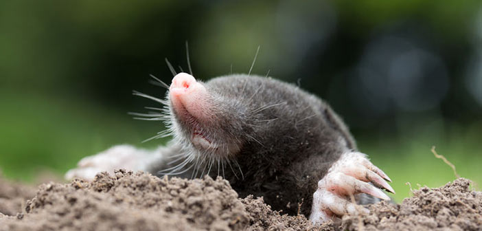 The Dirt On Getting Rid Of Moles