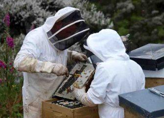 Imker bei der Honigernte. © Wirths PR / Neuseelandhaus