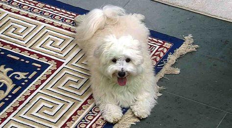 Hund Jottem ist glücklich Foto: © SAT.1