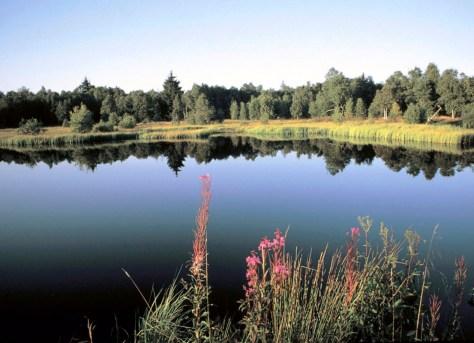 Rotes Moor in Fulda Foto: hr