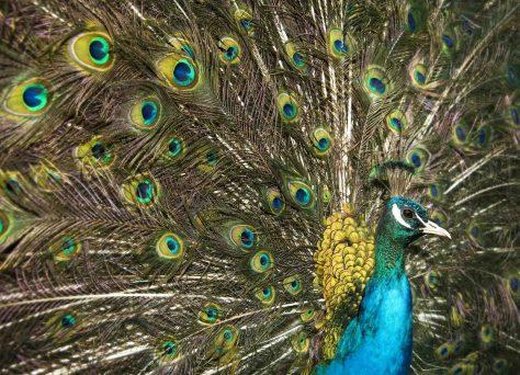 Dr. Jan Ole Kriegs spricht in seinem Vortrag zur Sex-Sonderausstellung über die bunte Vogelwelt. Foto: LWL/Oblonczyk