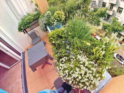 Üppig wachsende Blumen sorgen für Sichtschutz zum Nachbarn. Foto: Stiftung Warentest