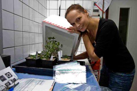 Im Labor: Maike Gleichenhagen von der Universität Bonn mit den teuersten und schwersten Kräutern der Welt. (c) Foto: Benno Zimmermann/Uni Bonn