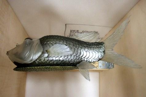 Ungewöhnliche Tiere wie der Bügeleisenfisch sind ab dem 22. Mai im LWL-Museum für Naturkunde zu sehen. Foto: LWL/Fialla