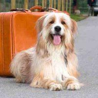 Was tun, wenn der Hund unter Reisekrankheit leidet