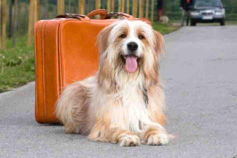 Tommy ist ein geübter Reisebegleiter und ist gerne mit Herrchen oder Frauchen auf Tour.  Foto: obs/Bundesverband für Tiergesundheit e.V./ Andrea Klostermann