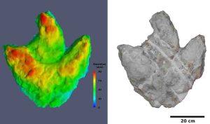 Dreidimensionales Modell einer der größten gefundenen Fußspur-Plomben. Links: Farbiges Höhenmodell. Rote Farben stellen die höchsten und blaue Farben die tiefsten Punkte der Fußspur dar. Rechts: Dreidimensionales Modell mit fotorealistischer Textur. (c) Abbildung: Jens Lallensack/2015