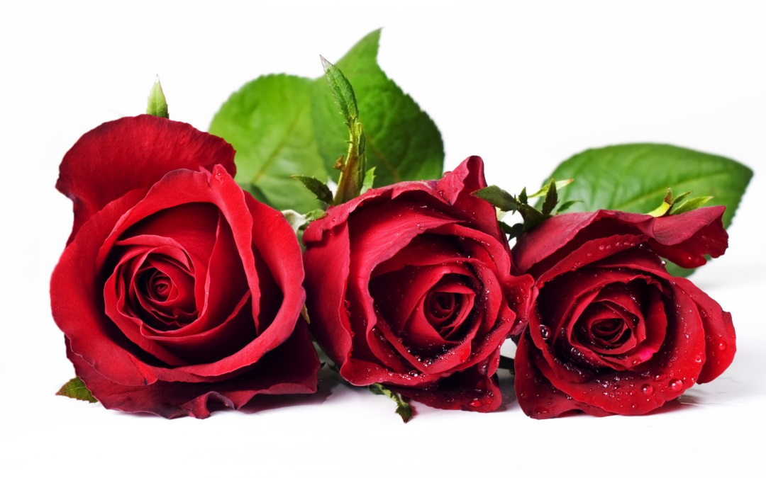 Cute Couples Wallpapers Full Hd 3d Rose Flower Wallpaper Hd Walls