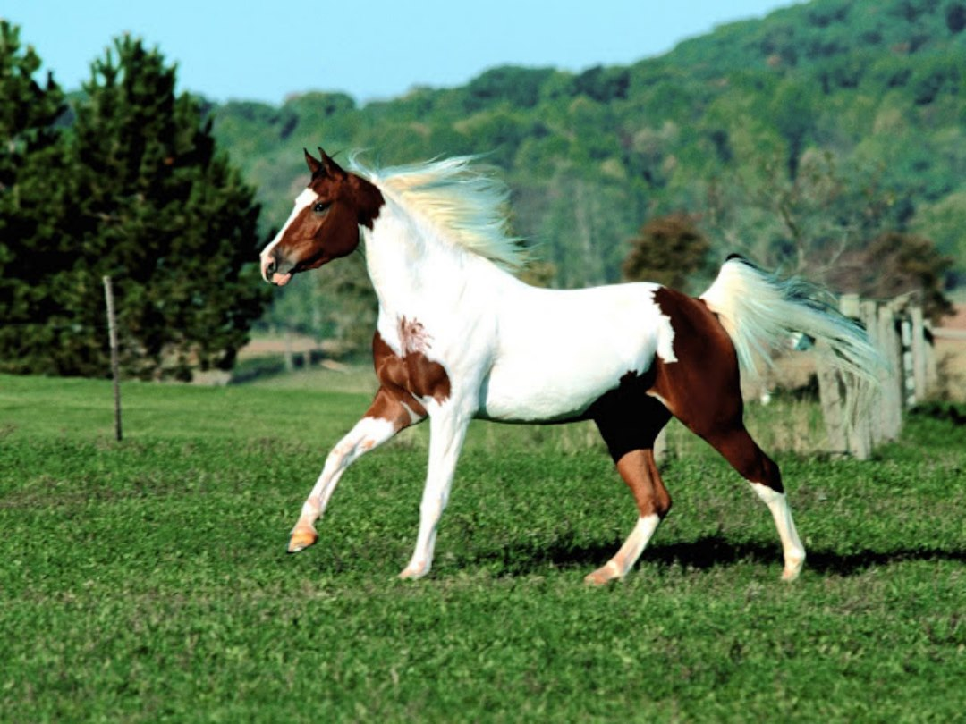 3d Wallpapers For Walls Pakistan Horse Wallpapers Hd Pictures Free Download Hd Walls