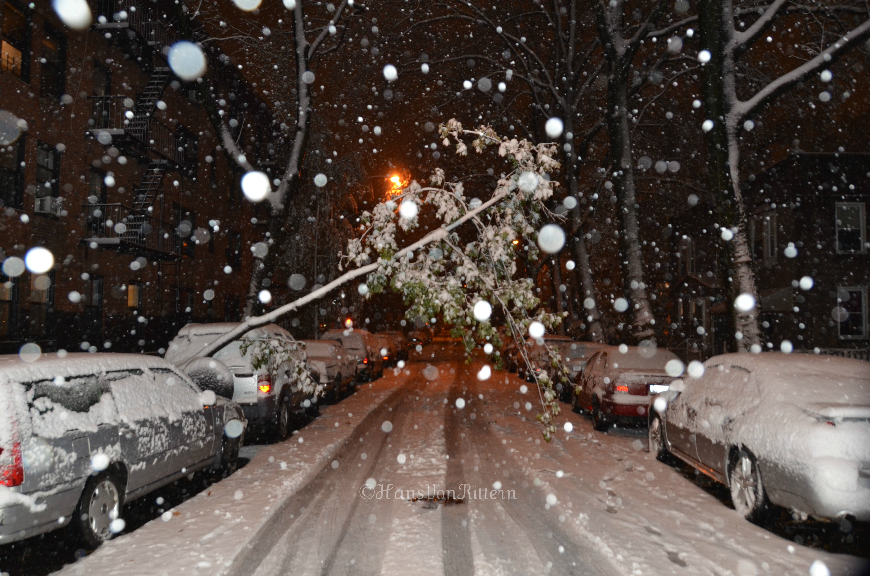 Christmas Snow Falling Wallpaper Trees With Snow New York City In The Wit Of An Eye