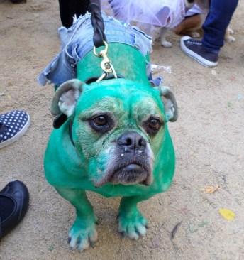 dogparade4