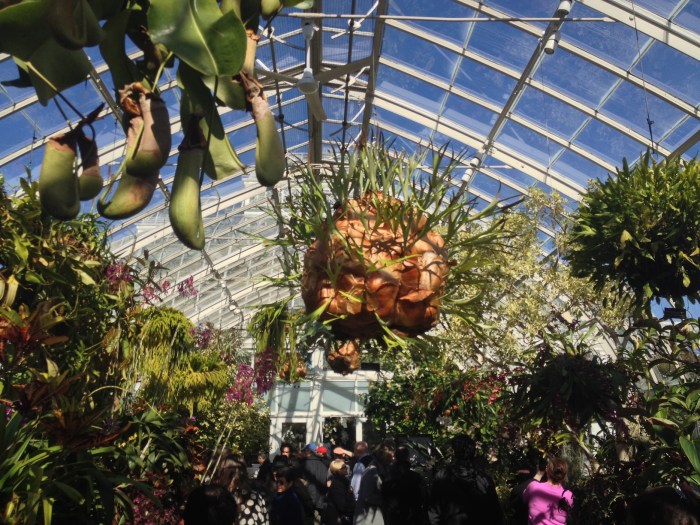 NYBG_Orchid_Show_weird