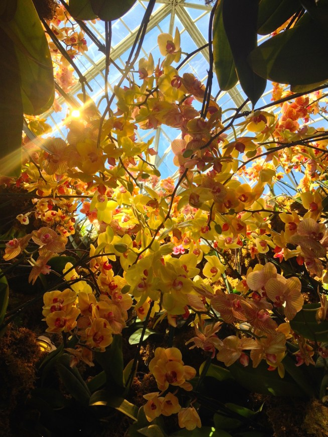 NYBG_Orchid_Show_sunshine