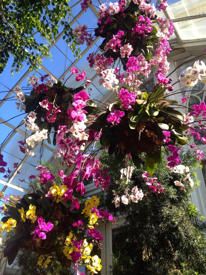 Orchid_Show_chandeliers_NYBG