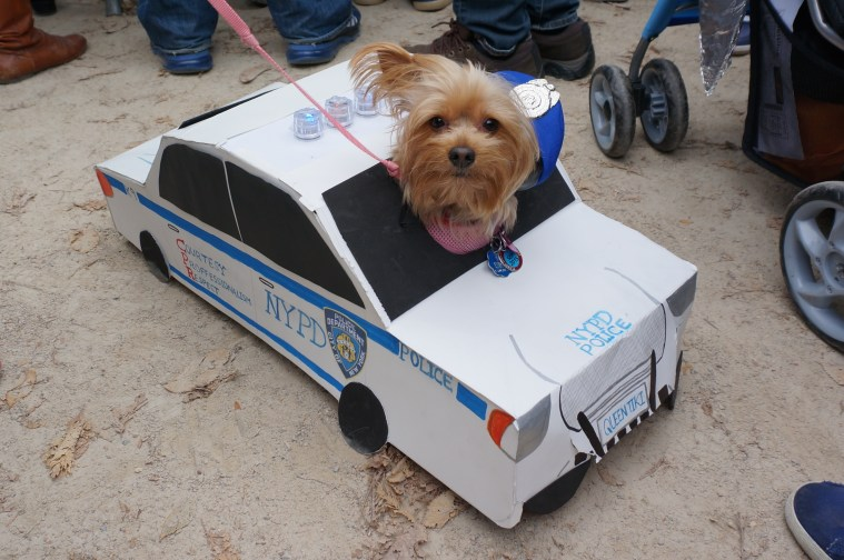 dog_parade_nypd