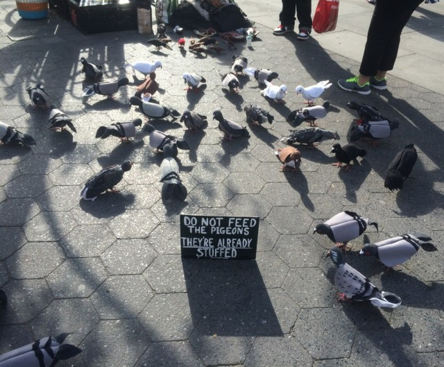 new-york-nature-scene-pigeons