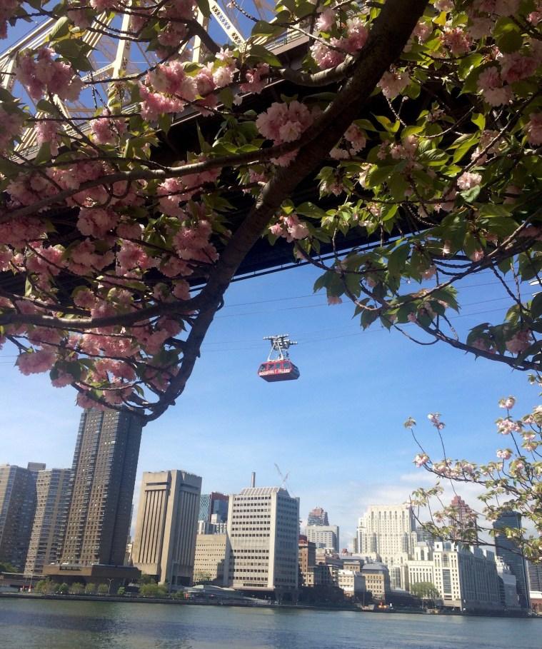roosevelt-island-tram-cherry-blossoms