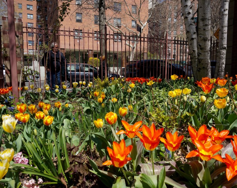west-side-tulip-festival-nyc