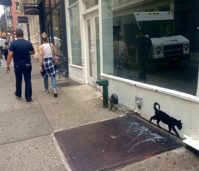 cats soho streets