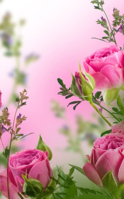 Top 10 Beautiful Flowers Live Wallpapers Apps for Android