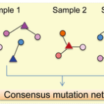 VarWalker: Personalized Mutation Network Analysis of Putative Cancer Genes from Next-Generation Sequencing Data