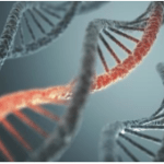 Largest Whole Genome Sequencing Study Looks at Two Mental Health Disorders