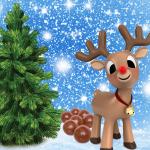 reindeer poo