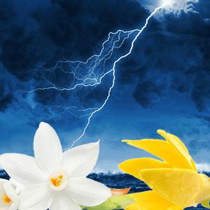 stormy nights fragrance