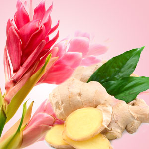 Ginger Aura Fragrance Oil
